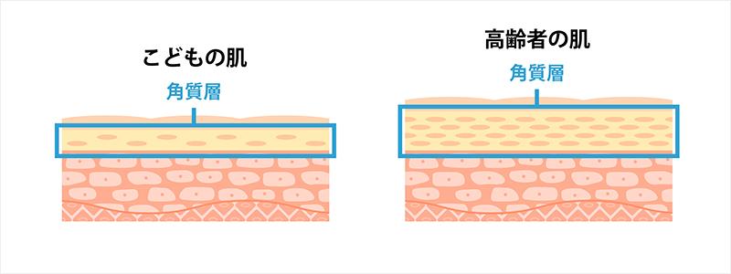 こどもと高齢者の肌の角質層の比較