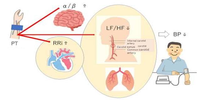 図5. PTによるリラックス効果とBP抑制の簡易図